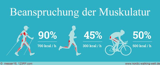 Bis zu 90% der Muskeln werden beim Nordic Walking trainiert. www.nordic-walking-weld.de