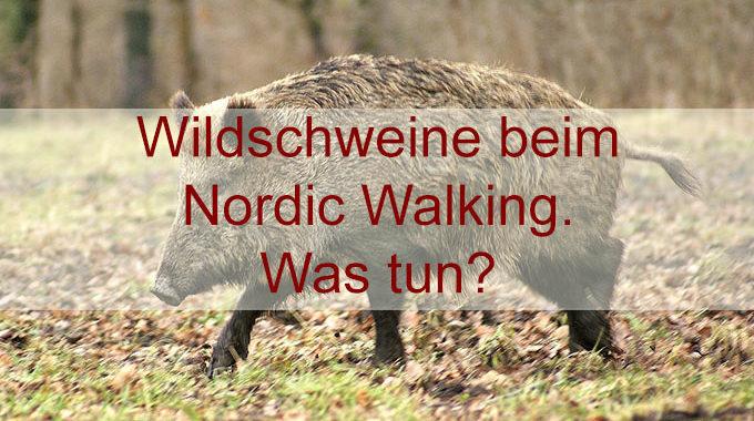 Wildschweinbegegnung beim Nordic Walken